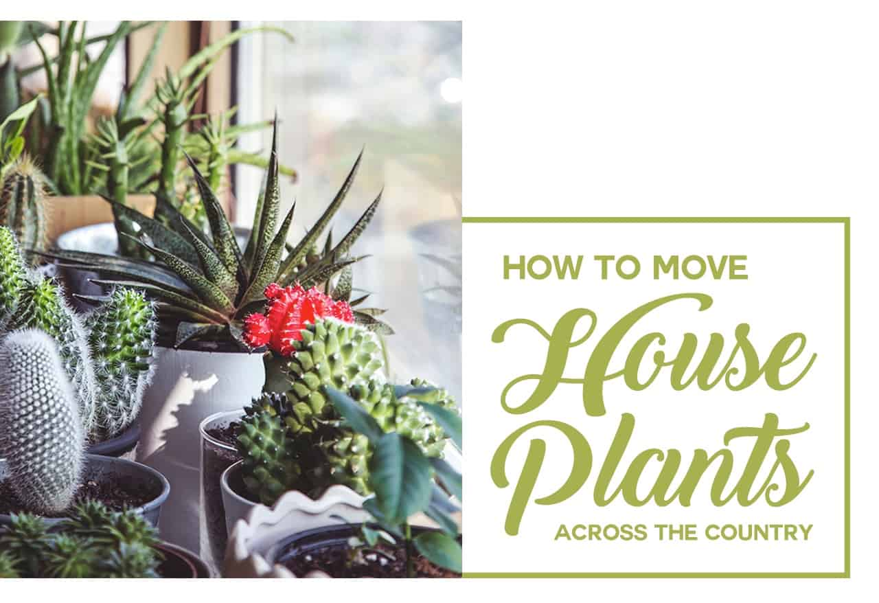Moving Housplants Cross Country