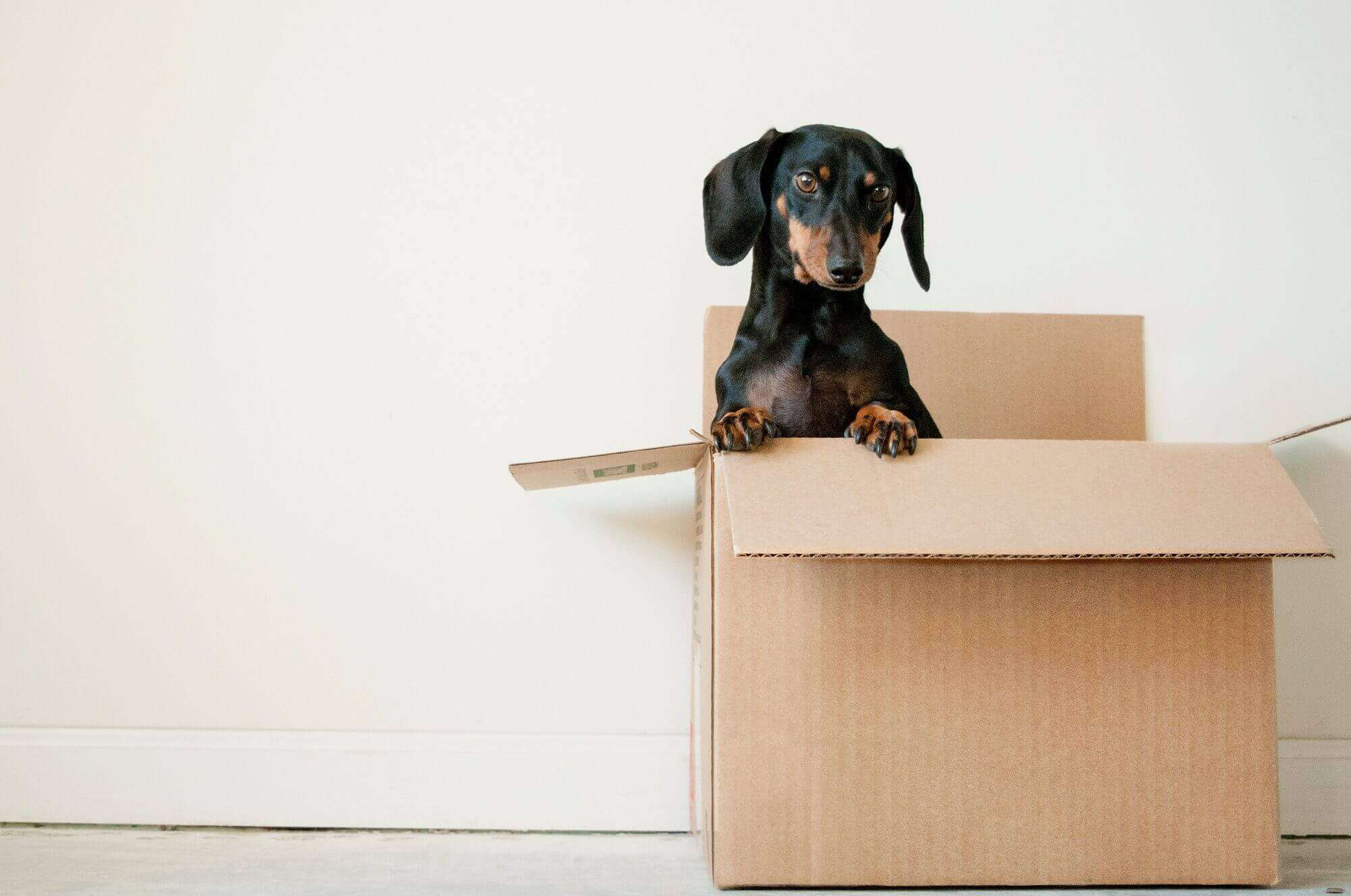 Professional Movers And Packers Cheap Full Service Packing